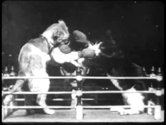 A History of Screenwriting - 19 in a series - The boxing cats (Prof. Welton's)